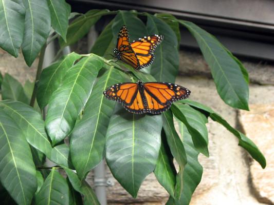 ButterflyIMG_7729web