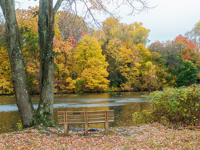 fall photo sheldrake